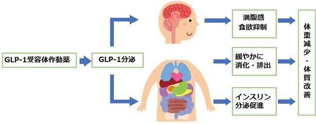 GLP1-2